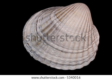 mussel isolated on a black background