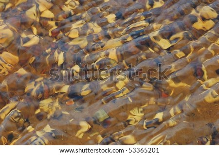 Mussels under running water - stock photo