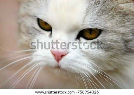 Mustachioed cat with sad eyes in rural areas