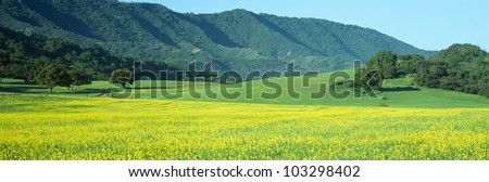 Mustard Fields, Upper Ojai, California - stock photo