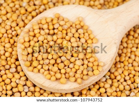 Mustard seeds in wooden spoon and over as  background - stock photo