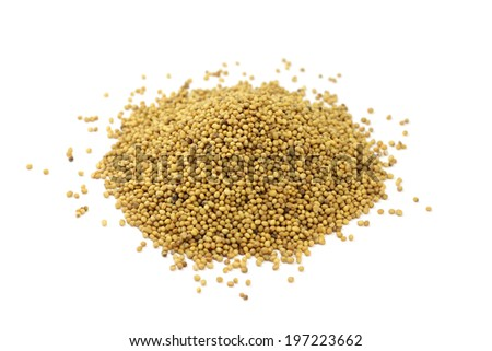 mustard seeds scattered on white background  - stock photo