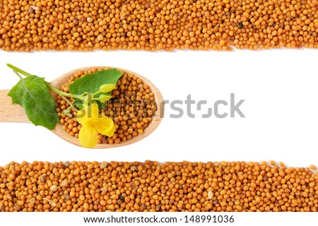 Mustard seeds with mustard flower isolated on white - stock photo