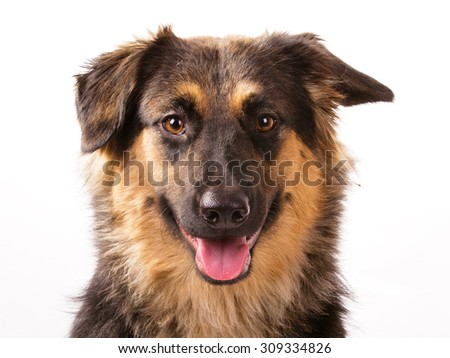Mutt Stock Photos, Royalty-Free Images & Vectors - Shutterstock