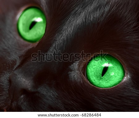 Muzzle closeup of black cat with green eyes - stock photo