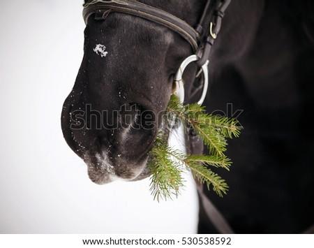 Horse branch black personals