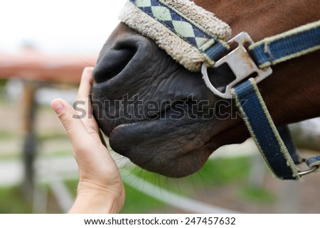 Muzzle of horse and human hand close-up - stock photo