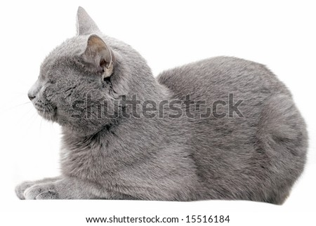 My lovely cat on white background