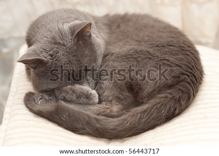 My lovely cat sitting on a chair - stock photo