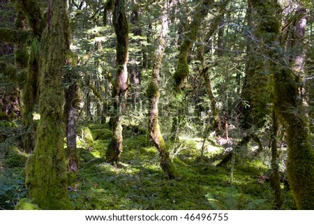 Mysterious but friendly forest with mossy trees and sunlight - stock photo