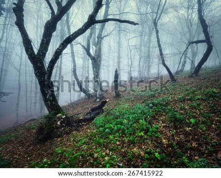 Mysterious dark autumn forest in blue fog with orange leaves, green plants, trees and branches . Autumn morning in Crimea (Mountain Ai-Petry) - stock photo