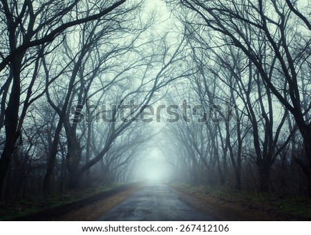 Mysterious dark autumn forest in fog with road, trees and branches . Autumn morning in Crimea (Mountain Ai-Petry) - stock photo