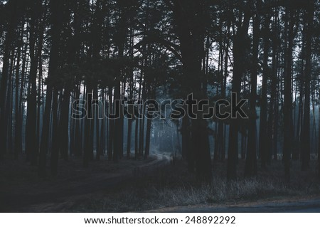 Mysterious dark night forest - stock photo
