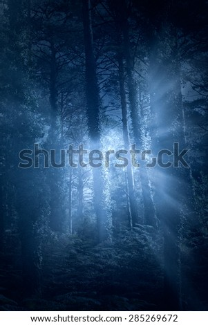 Mysterious european forest with light rays ( used analog and digital filters) - stock photo