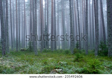 Mysterious foggy forest in winter. - stock photo