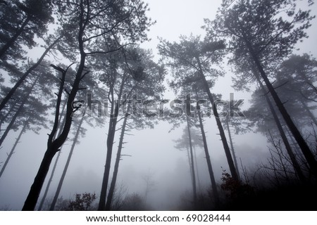 mysterious foggy forest in winter - stock photo
