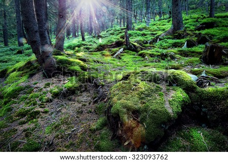 Mysterious forest under the bright sun - stock photo