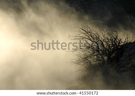 Mysterious forest with a view of coming fog