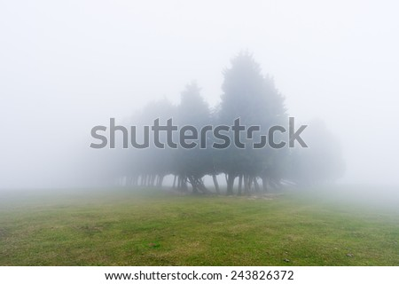 mysterious forest with fog and beautiful light - stock photo