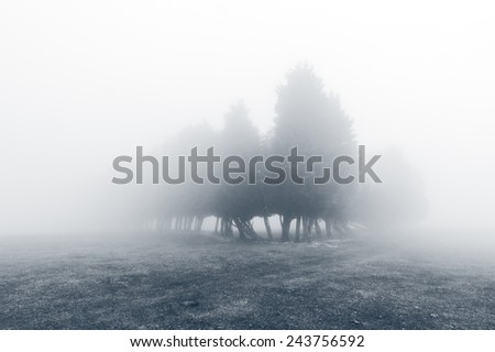 mysterious forest with fog and beautiful light. Black and white - stock photo