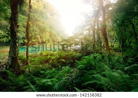 Mysterious Mayan jungle in the national park Semuc Champey Guatemala. - stock photo