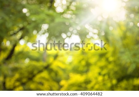 Mysterious mood purity art. Blinking bio vert lush plant glisten deep fond of vivid dense irish mint color lit by white day shine not in focus. Scenic view with space for text on soft spring copyspace - stock photo