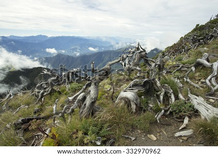 Mysterious old rustic tree branch at Summit of Xue Shan Mountain (Snow mountain) in Taiwan - stock photo