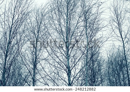Mysterious scary forest, branches trees - stock photo