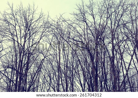 Mysterious scary forest, branches trees, vintage toned colors - stock photo