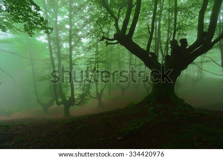 mysterious scary forest with fog