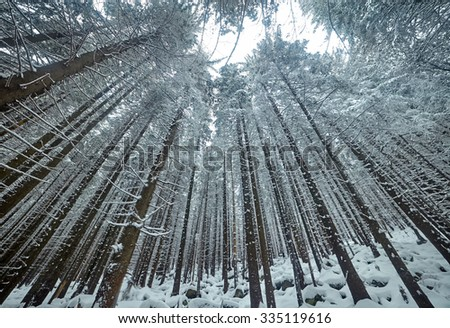 mysterious forest in winter - photo #20