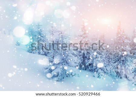 Mysterious winter landscape majestic mountains in winter. Magical winter snow covered tree. Photo greeting card. Bokeh light effect, soft filter. Carpathian. Ukraine. Europe