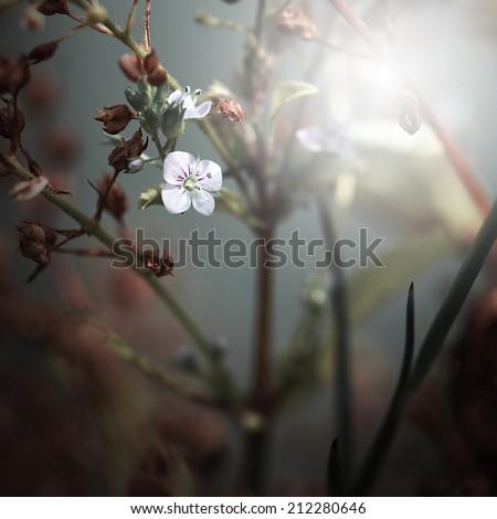 mystery beautiful white vintage flower background - stock photo