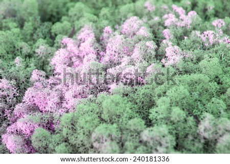 Mystery moss as a wallpaper or background, Karelia, Scandinavia, Norway, Russia - stock photo