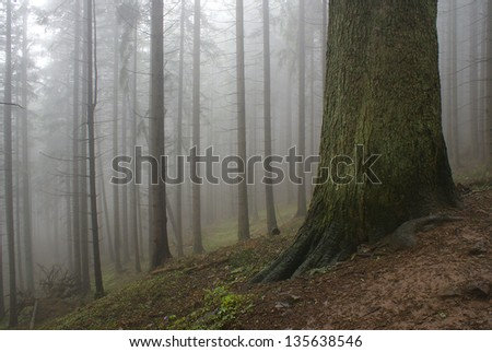 mystic and foggy forrest - stock photo