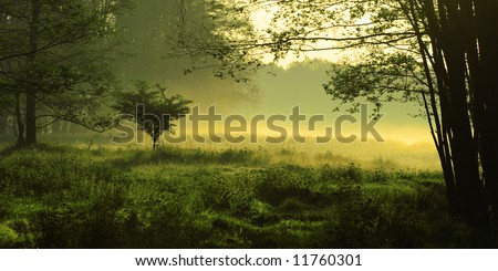 Mystic foggy landscape in the morning - stock photo