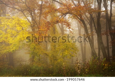 Mystic forest during fall - stock photo