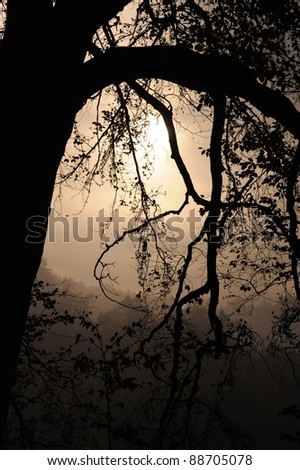 Mystic Morning in Switzerland - stock photo
