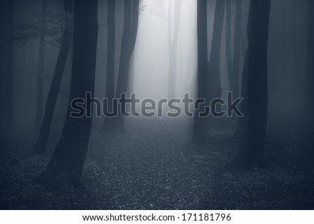 Mystic trail in a foggy forest - stock photo