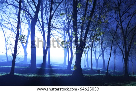 Mystical forest in blue color at evening - stock photo