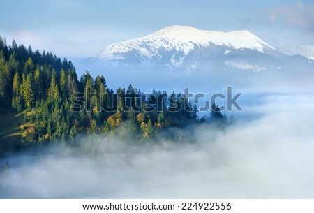 Mystical forest on the mountain slope - stock photo