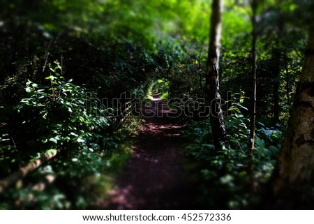 mystical forest path - stock photo