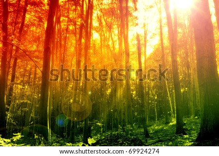 Mystical forest with sun ray - stock photo