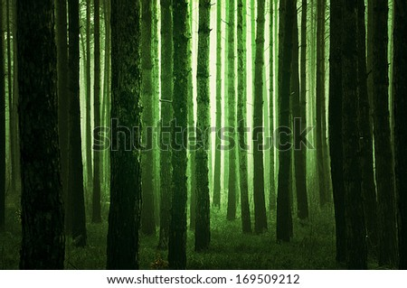 Mystical green forest  - stock photo