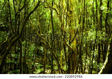 Mystical green jungle - stock photo