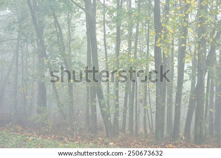 Mystical greenwood in deep mist - stock photo