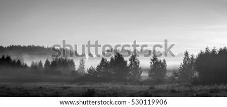 mystical landscape of foggy field and woods