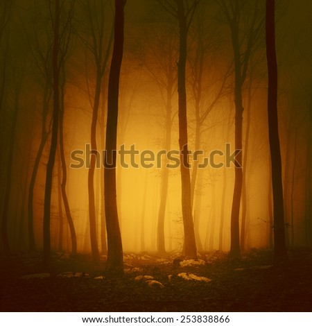 Mystical orange red light forest scene background. - stock photo