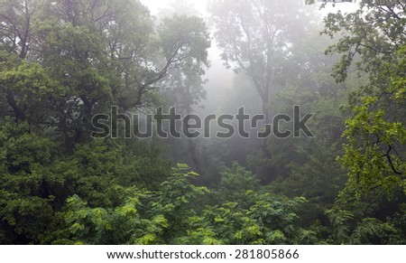 Mystical rain forest covered in fog - stock photo