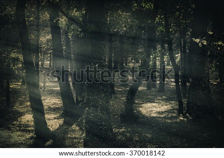 Mystique Dark Forest With Fog - stock photo